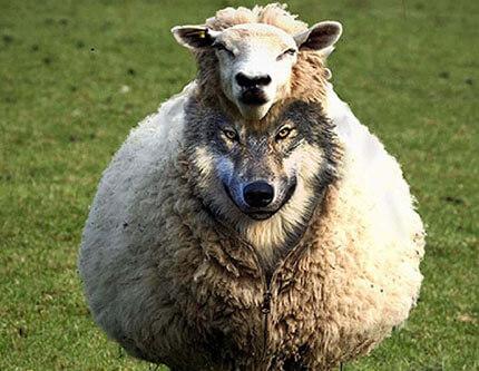 angol idiómák és kifejezések - wolf in sheepskin